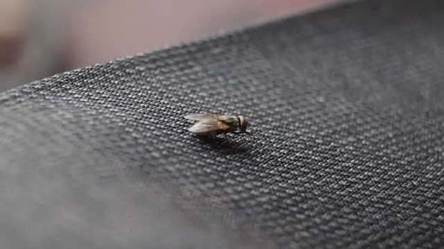 mouche dans la maison
