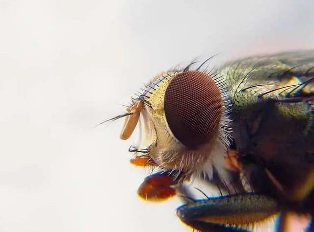 comment se soigner de la piqûre de moustiques