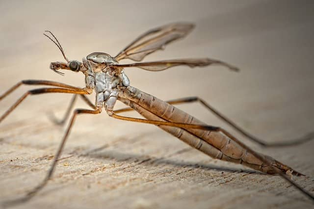 se protéger des moustiques