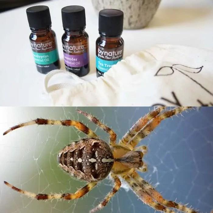 Les huiles essentielles contre les araignées