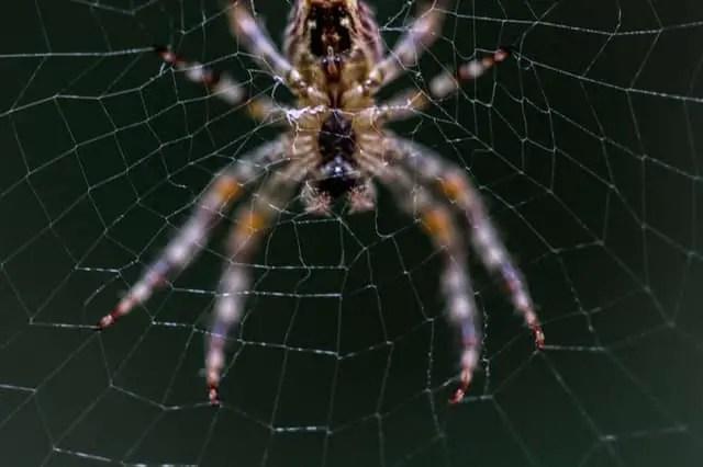 comment soigner une piqûre d'araignée