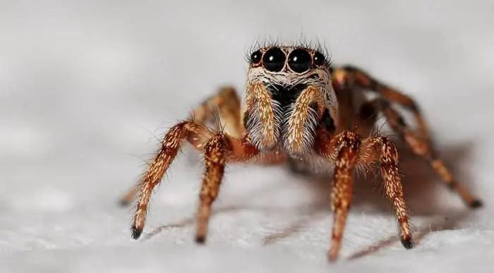 piqûre d'araignée qui gratte