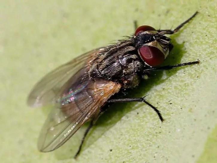 Comment détecter un nid de mouches