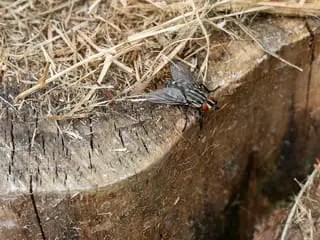 Comment détecter un nid de mouches ?