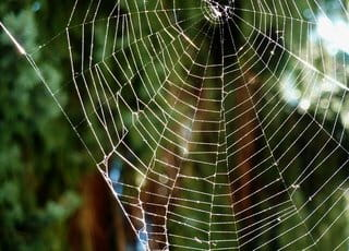 Quels sont les meilleurs produits pour tuer les araignées ?