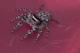 Produits anti araignées longue durée