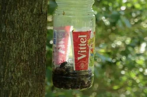 piège en bouteille des frelons asiatiques