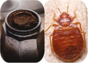 Read more about the article Comment utiliser le café contre les punaises de lit ?