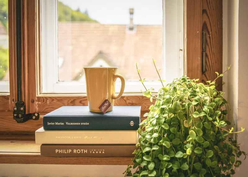 green leafed plant beside books and mug