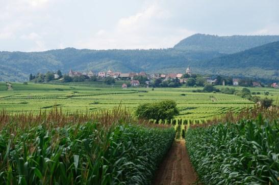 Un village au milieu des vignes