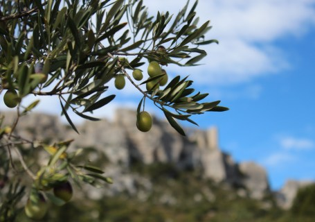 PDT-2018-Moulin Castelas-Les Baux de Provence-Les Papotis de Thalie