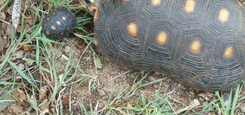 Maman tortue et son Bébé