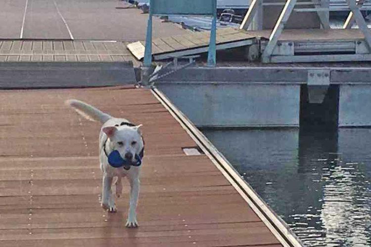 Eddy sur le ponton toujours avec sa laisse