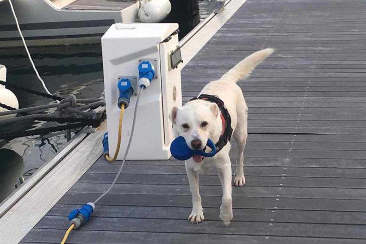 Eddy sur le ponton il adore se promener avec sa laisse