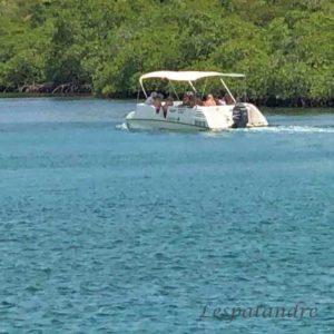 Le Marin promenade dans la mangrove
