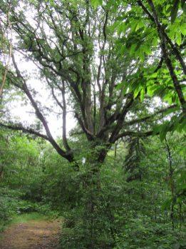 Un arbre remarquable