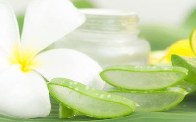 Aloe Vera : 17 utilisations beauté/santé + 11 recettes !