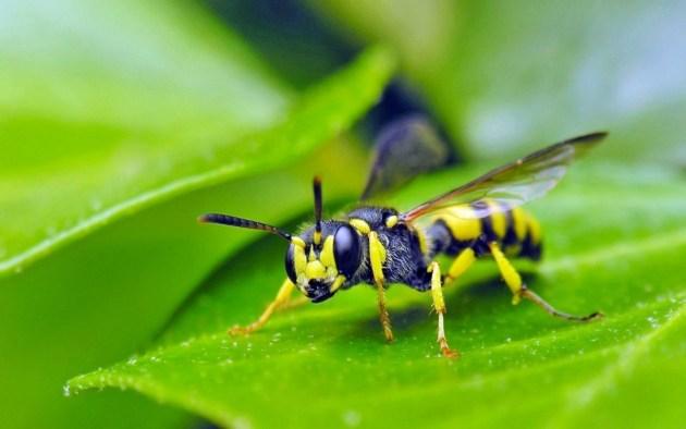 huile-essentielle-insecte 3