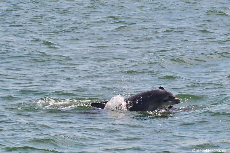 Irlande - A la rencontre des dauphins
