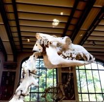 Museum_Paris_2