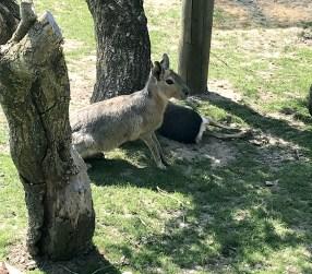 Les animaux du Parc Challandes