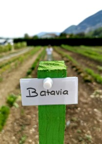 Ici, c'est Batavia