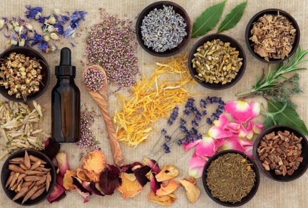 phytologie naturopathie