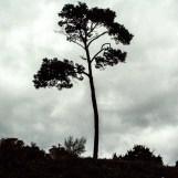 Un arbre d'Afrique