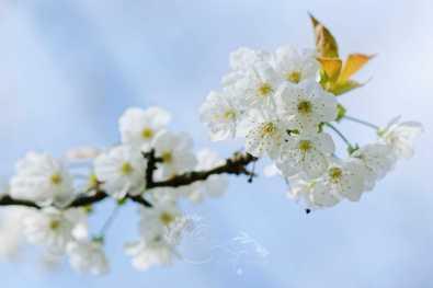 Fleurs du Bosquet Sud