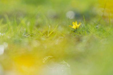 Une Fleur printanière