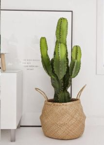 cactus-panier-osier