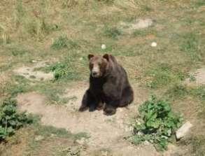 Parc national des Ours Dansants de Belitsa (Bulgarie, tourisme naturel) 4