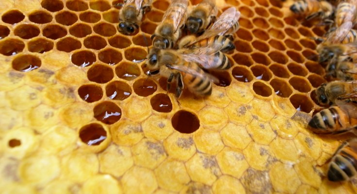 """""""honey w/ bee"""" (CC BY-SA 2.0) by youarelee"""