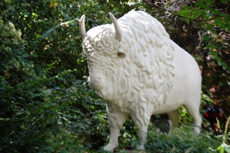 A White Buffalo Guards the Gate at Christman's Studio in St. Louis, MO
