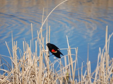A colorful bird rests near a pond on ND Hwy 1