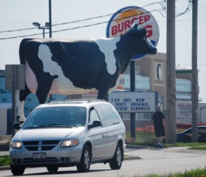 "Sissy the Cow in DeForest, WI. Playing a little ""Chick-Fil-A"" on Burger King!!"