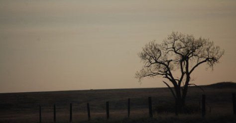 A lonely tree decorates US Hwy 2 east of Culbertson, MT