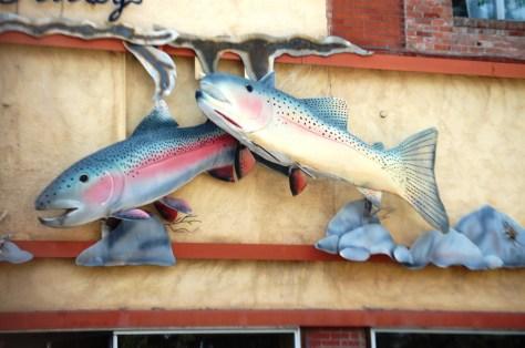 Dan Bailey's Fly Fishing Supply