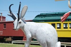 Jackalope Country - Douglas, WY