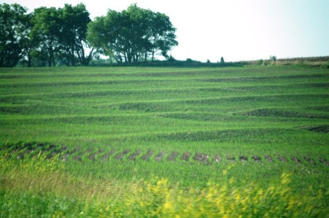 Rolling corn fields in Eastern Nebraska
