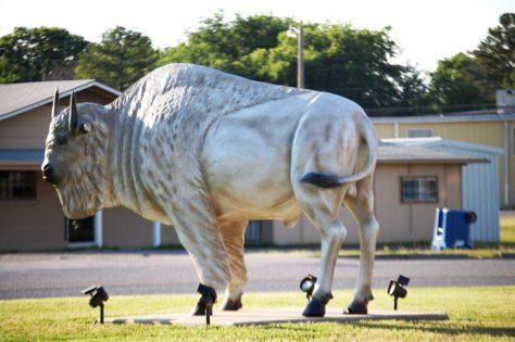 White Bison in Atoka, OK