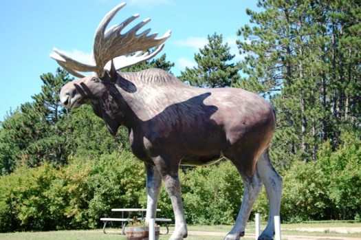 Big Bull Moose in Tomahawk, WI