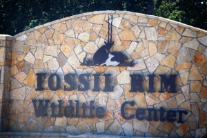 Fossil Rim Wildlife Center near Granbury, Texas