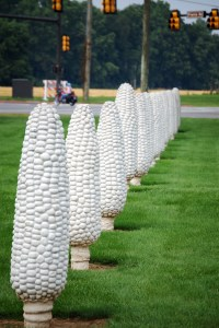 The Field of Corn in Dublin, OH has 109 ears of corn