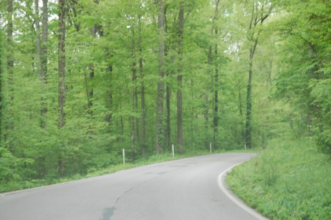 Forested road on KY 89. Much of the drive south of Irvine is like this