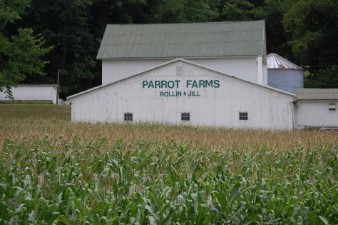 Parrot Farms surrounding by large corn fields