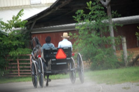Amish Buggy on Mohican Valley Trail near Danville, OH
