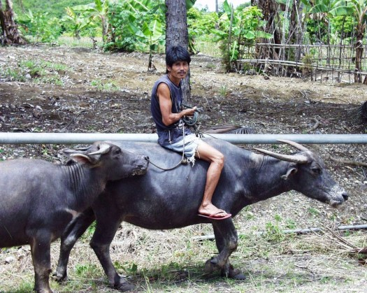 Buffalo Man - Cebu