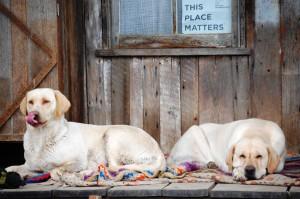 Penn's Store dogs
