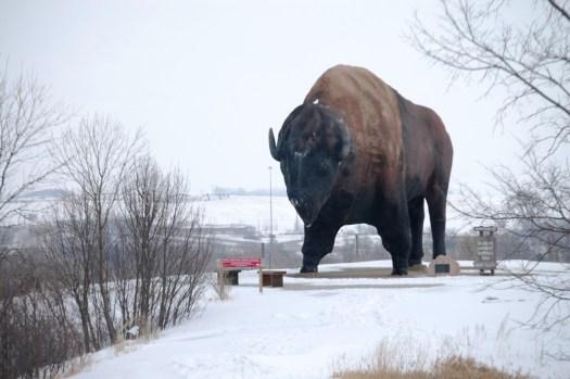 World's Largest Buffalo - Jamestown, ND